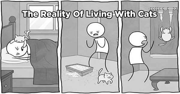 12 Funny Comics That Reveal The Reality Of Living With Cats