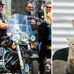 Biker Gang Confronts Violent Pet Owners To Rescue Desperate Animals From Them
