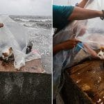 Boy in Philippines Finds A Cat Giving Birth During Typhoon!
