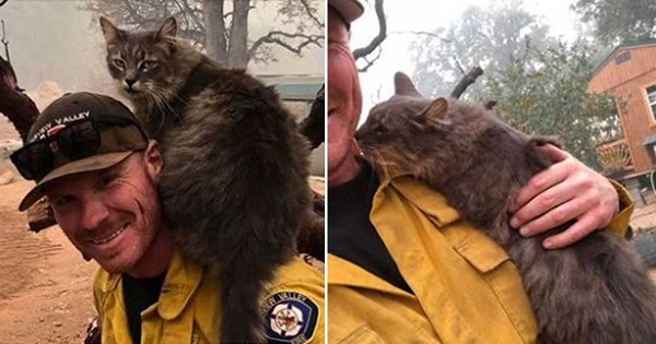 California Firefighter Rescued A Kitty From Wildfire And Now She Won't Leave His Side