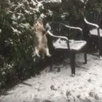 Cat Discovers Snow For The Very First Time!