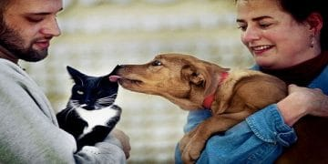 Dog Owners Are Happier Than Cat Owners, Survey Finds!