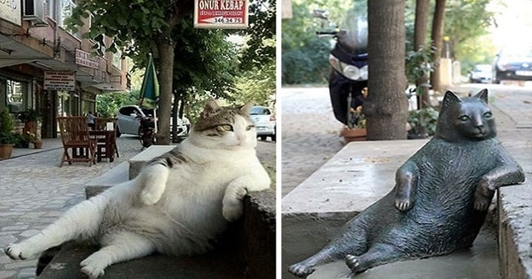 Famous Cat Honored With His Very Own Statue At His Favorite Spot