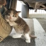 Guy Finds Scared Kitten Under A Truck And Just Couldn't Say No To Her