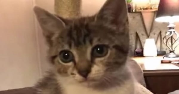 Jealous Kitty Doesn't Want Owner To Take Photos Of New Kitten!