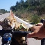 Man Cycling Around World Finds A Poor Stray Kitten And Brings Her On His Journey!