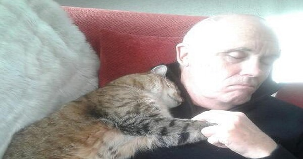 Man Recovering From Surgery Wakes Up To Cat Snuggling With Him - He Doesn't Have A Cat