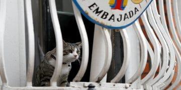 Julian Assange cat