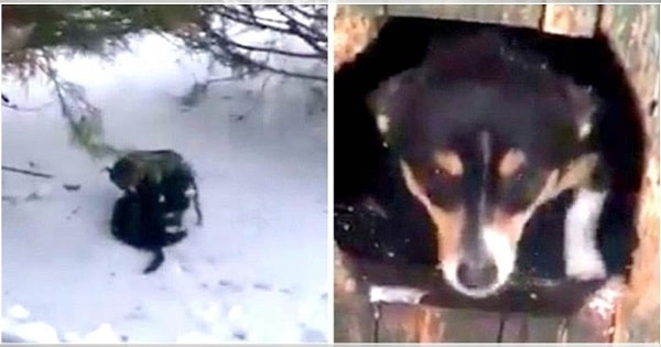 Video Of Dog Dragging Freezing Cat Into His Doghouse To Warm Kitty Back Up!