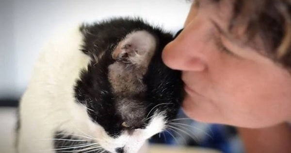 Woman Flies 500 Miles Just To Save Cat She Saw On Facebook!