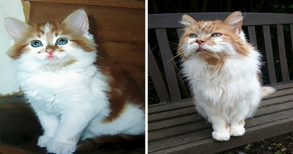 137 in Human Years - Rubble Is the Oldest Cat in the World - And Celebrates His 30th Birthday!