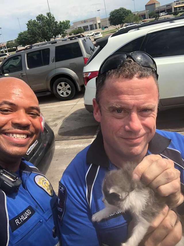 Kittens Can't Stop Cuddling With The Police Officer Who Rescued Them 2
