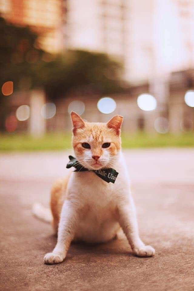 University Hosts A Graduation Ceremony For Its Cat Mascot 3