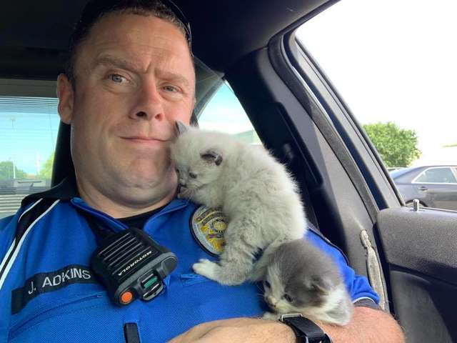 Kittens Can't Stop Cuddling With The Police Officer Who Rescued Them 4