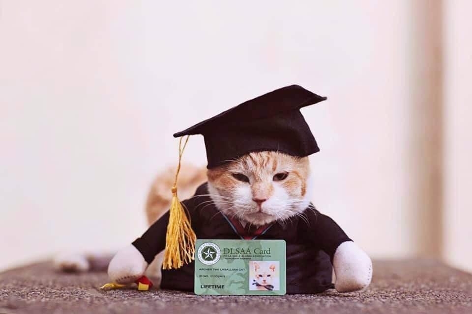 University Hosts A Graduation Ceremony For Its Cat Mascot 4