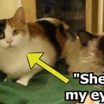 Blind Cat And His Seeing-Eye Sister Only Wish To Be Adopted Together