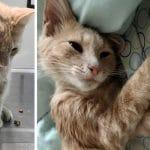 Broken-hearted Man Finds Cute Stray Kitten On Doorstep