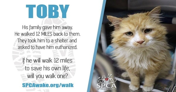 Cat Walks 12 Miles To Get Home To Family And Then They Ask Shelter To Euthanize Him