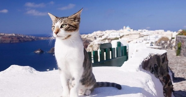 Greek Cat Sanctuary Now Hiring Caretaker To Live On Island, Supervise 55 Cats!