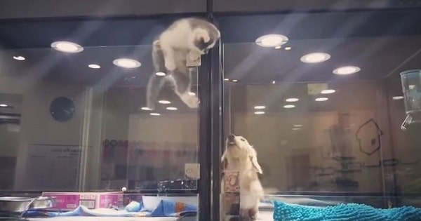 Kitten Escapes Cage To Play With Puppy!