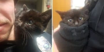 Kitty Found Stuck In Snow, Clings to Rescuer's Shoulder and Won't Let Go