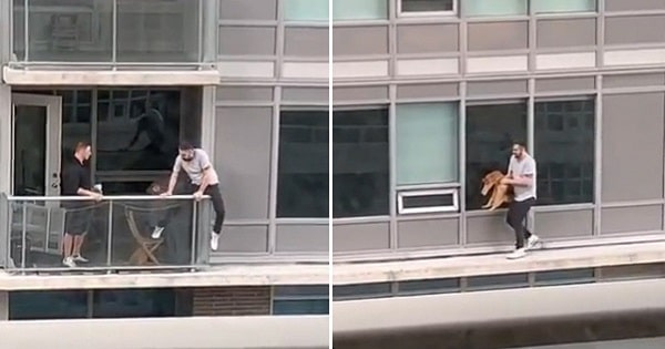 Man Risks Own Life Walking Along 6th Floor Ledge To Save His Cat!