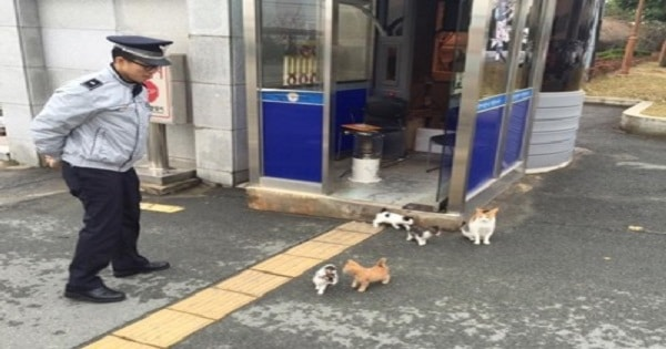 Stray Cat Brings Her Family to Police Station And It Becomes Their Forever Home
