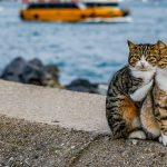 These Pics of Turkish Cats Will Warm Your Heart