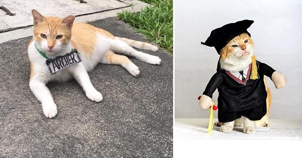 University Hosts A Graduation Ceremony For Its Cat Mascot Before He Moved To His Forever Home!