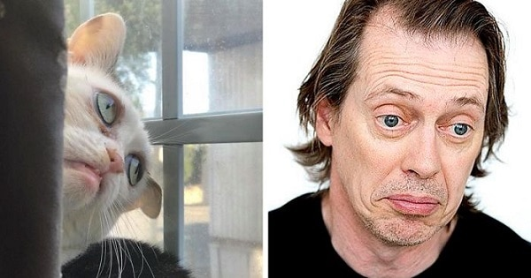 Woman Adopts Cat Who Has Been Living In A Shelter Since It Was 2 Days Old, Realizes It Looks Like Steve Buscemi