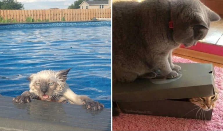 """10+ Photos That Prove Animals Are People in """"Fur Coats"""""""