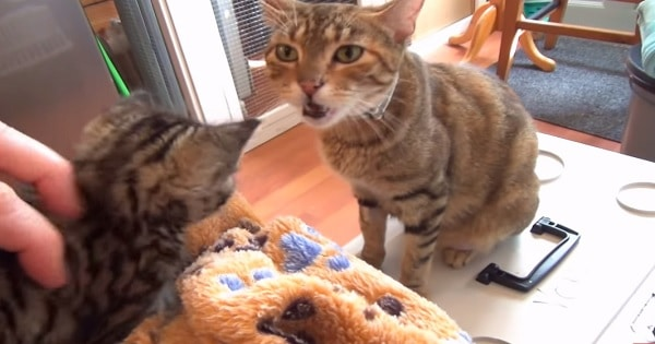 A Momma Cat Talks to Her Babies in the Cutest Way