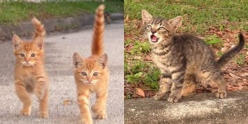 A Stranger Finds 3 Abandoned Kittens Meowing for Help