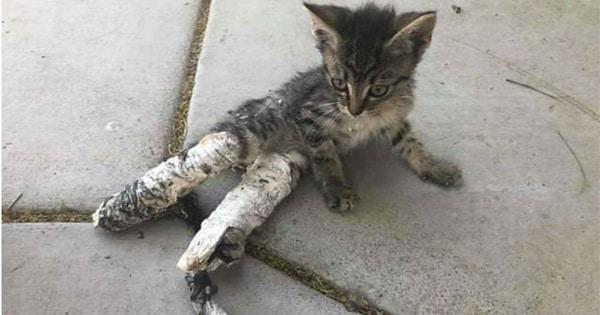 Kids Find Kitten In Leg Casts Abandoned On Sidewalk