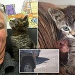 Man Saves Kitten with Feet GLUED to the Road!