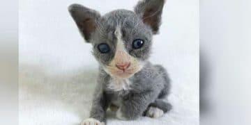 Meet Meeseeks, The Kitten That Looks Like A Felt Toy