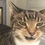 This Cat Can't Find a New Home Due to Sneezing