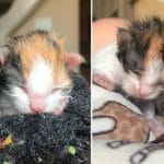 Two Preemie Kittens Siblings Fought Together To Survive