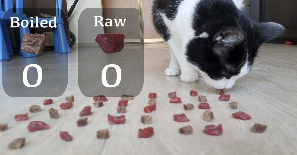 What Do Cats Love More - Raw or Boiled Meat?