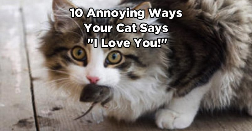 "10 Ways Your Cat Says ""I Love You"""