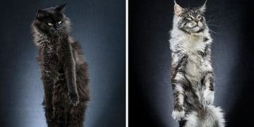 Just What the Doctor Ordered – Check Out This Photo Series on Standing Cats