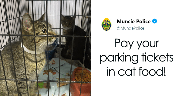 Local Indiana Residents Can Now Pay for Their Parking Tickets by Helping Out in a Shelter and Donating Cat Food