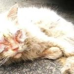 Poor Cat Was Rescued From Darkness