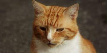 Sad News – Social Media Star Garfield the Cat Passes Away