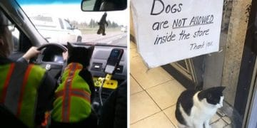 The Funniest Working Cats (Gallery)