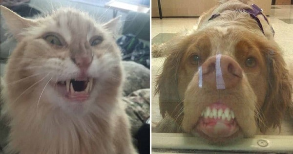 These Unflattering Pet Photos Will Make Your Day