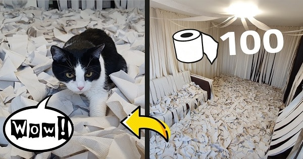 This Cat Is So Happy When He Has A Room With Full Of Toilet Paper