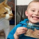 A Boy Goes to Shelter to Adopt a New Cat and Finds His Missing Cat
