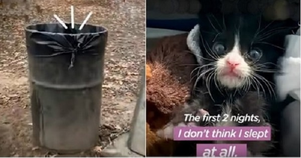 Litter Of Kittens Found Crying In Trash Bag