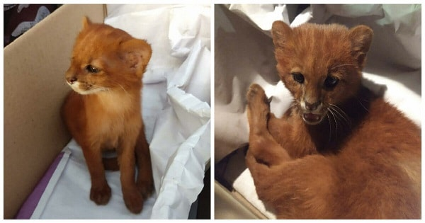 Woman Finds Abandoned Kitten Tito